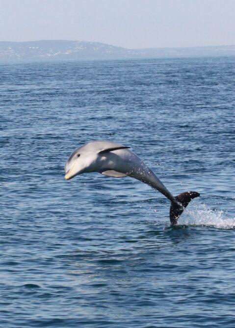 Żyją w australijskich wodach