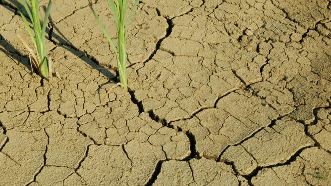 Naukowcy: susze w Europie największe od czasów Imperium Rzymskiego