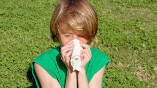 Kolejne alergeny dokuczają uczulonym. Grzyby atakują, drzewa nie odpuszczają