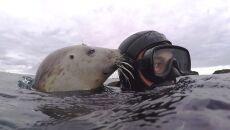 Ben Burville pływa z foką (Dr Ben Burville, Newcastle University)