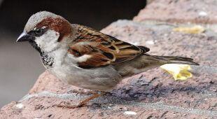 Ameryka straciła prawie trzy miliardy ptaków