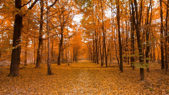 Prognoza pogody na dziś: pogodny, <br />jesienny dzień. Miejscami będzie ciepło