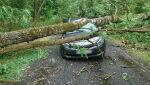 Drzewo spadło na auto w powiecie czarnkowskim
